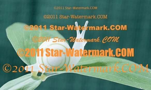 watermark effect demo2